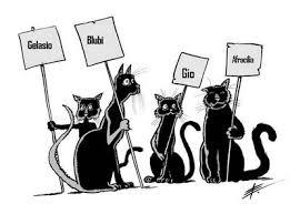 4 gatti