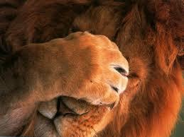 leone dispiaciuto