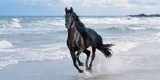 cavallo corre mare