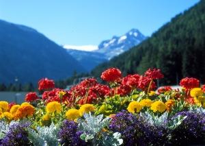 Primavera-dei-fiori